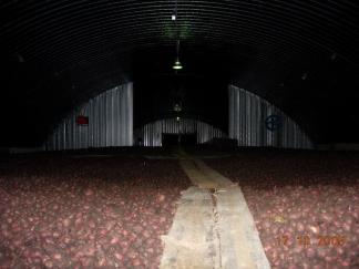 Картофель хранится навальным способом