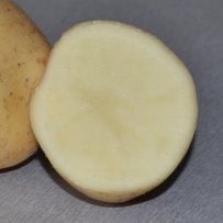 Семенной картофель «Невский». Мякоть белая.