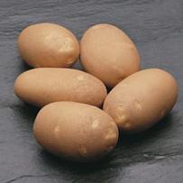 Семенной картофель «Инноватор». Форма клубня овальная. Сорт для приготовления «картофеля-фри»