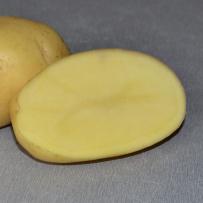 Семенной картофель «Импала». Мякоть светло-желтая.