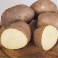 Семенной картофель «Инноватор». Мякоть светло-желтая. Сорт для приготовления «картофеля-фри»