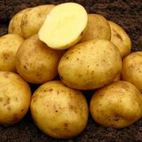 Семенной картофель «Нандина». Мякоть светло-желтая.