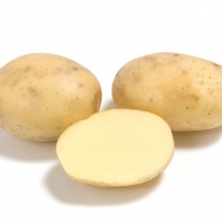 Семенной картофель «Коломба». Мякоть светло-желтая.