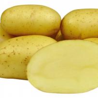 Семенной картофель «Колетте». Форма клубня овальная, мякоть светло-желтая.